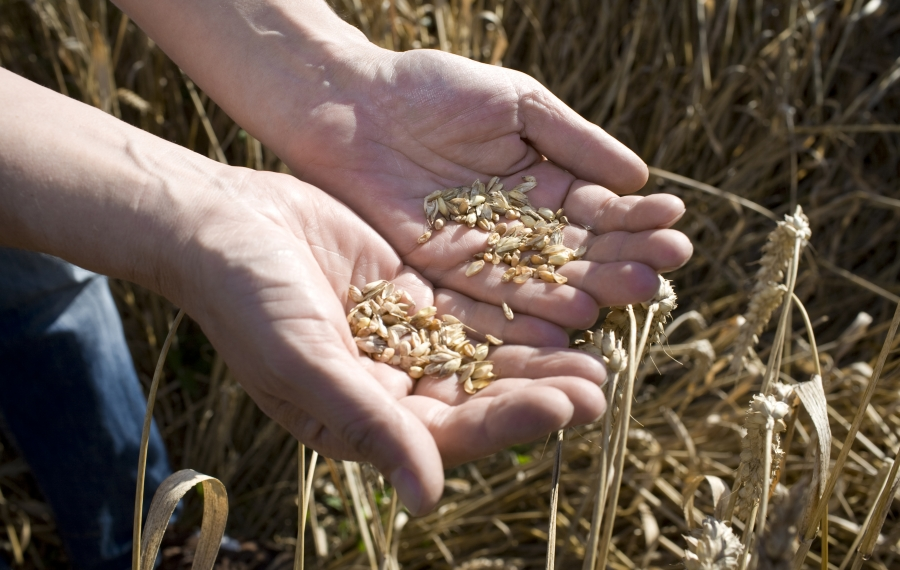 graan in hand