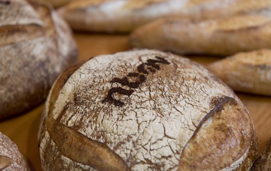 brood nbov logo